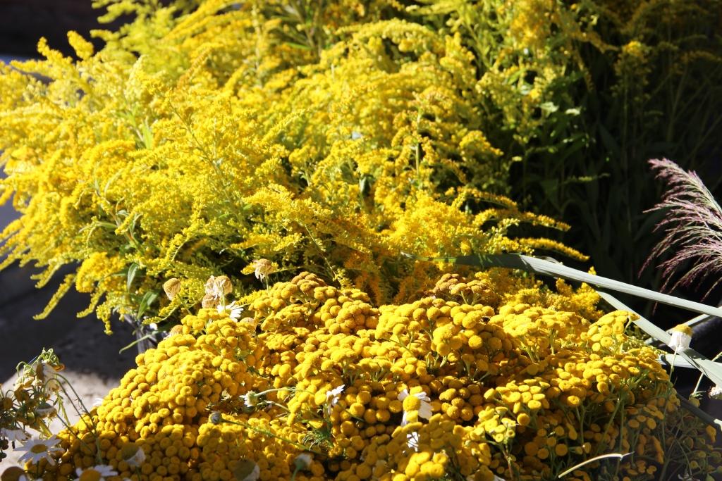 Mariä Himmelfahrt – Kräuterbuschen zur Ehre Mariens und den Menschen zur Freude